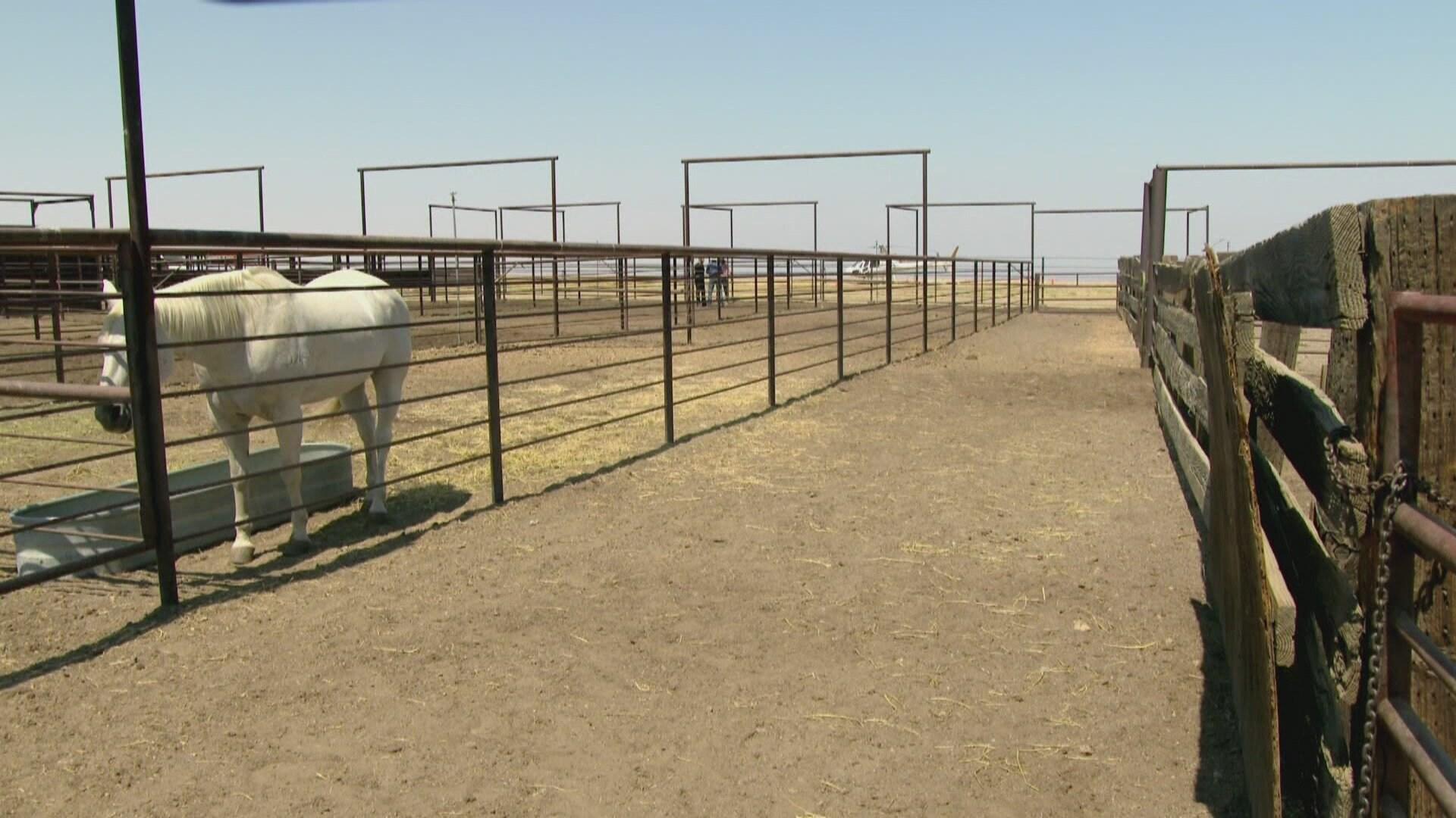 Autonomy Farms & Too Pretty