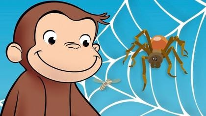 Why Do Spiders Build Webs?